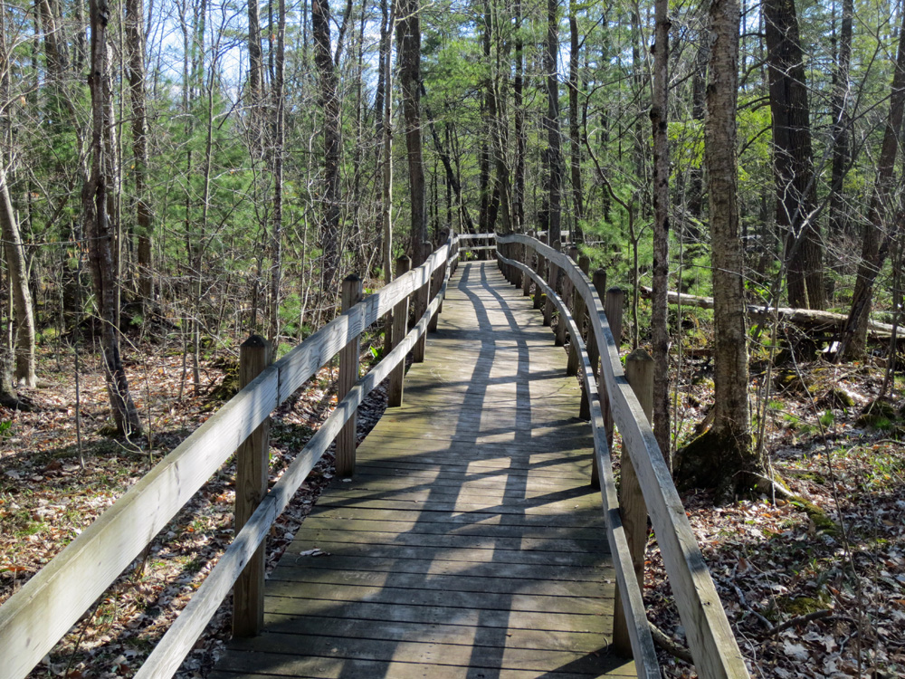 Boardwalk, Sapsucker Woods, Cornell Laboratory of Ornithology, Ithaca, NY