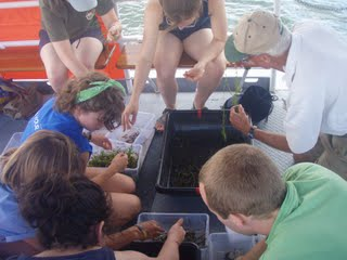 Cayuga Lake Floating Classroom hydrilla survey