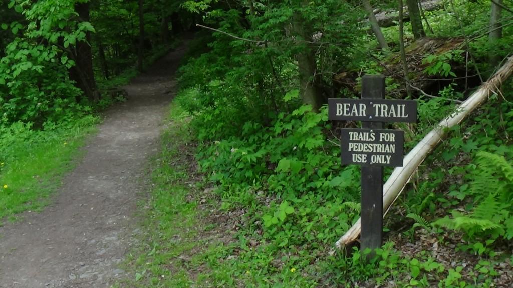 Bear Trail in Ithaca, NY